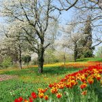 Pavasaris – stebuklo laukimas