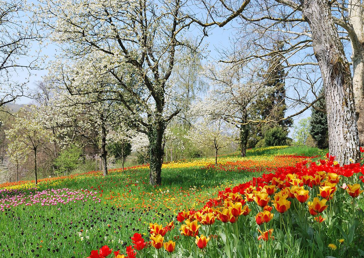Pavasaris - stebuklo laukimas
